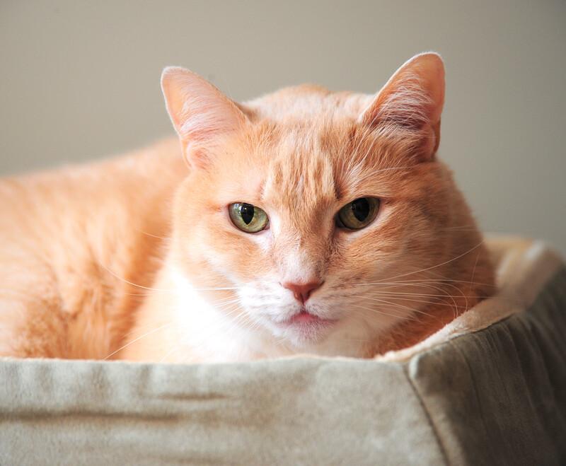 parker senior pet care